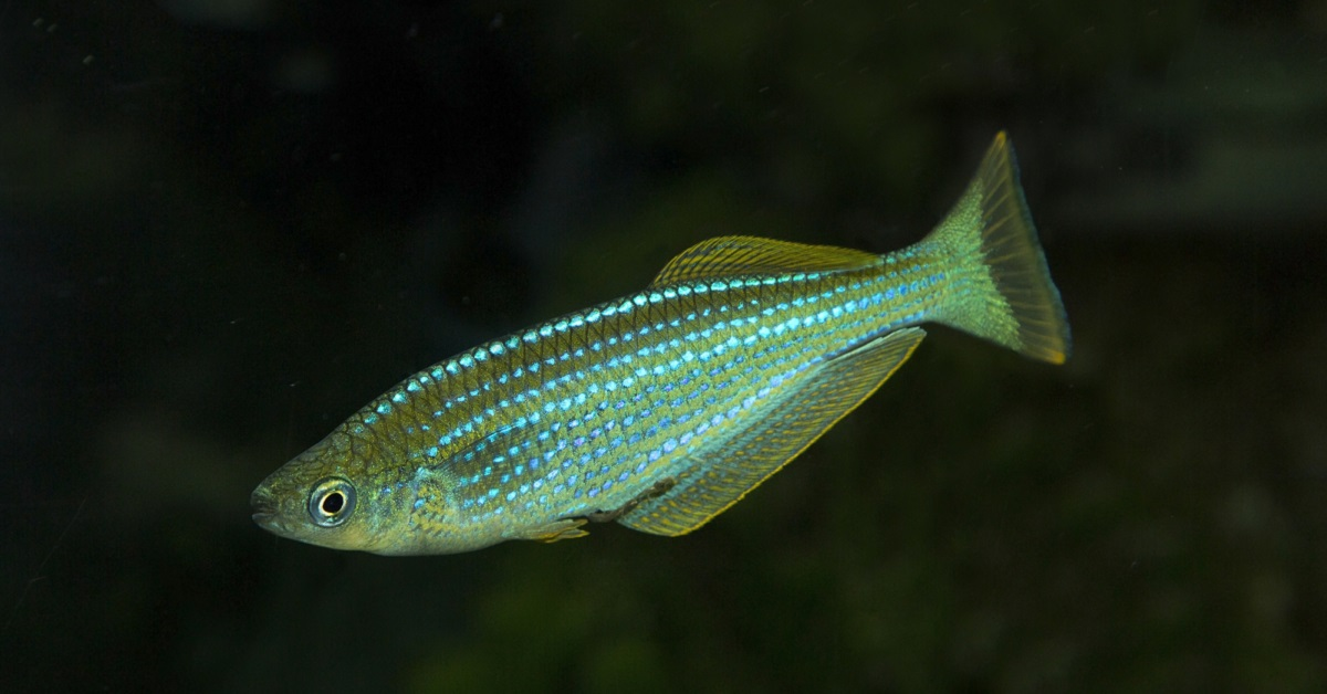 How One Tiny Fish Can Help You Defy Aging