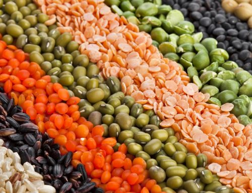 Is Plant Protein the Fountain of Youth?